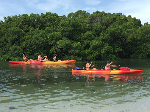 Sarasota Kayak Tour